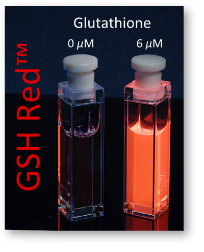 The probe GSH Red shines up in the prescence of Glutathione
