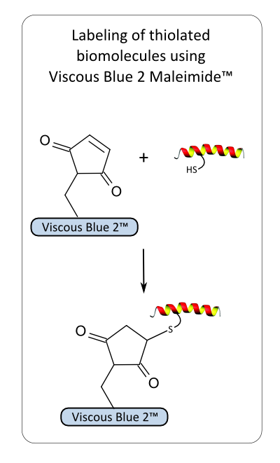 Viscous Blue 2 Maleimide reaction
